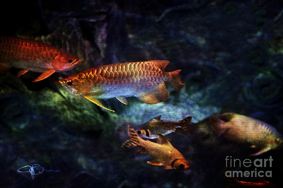 Rainbow Exotic Fish Painting  - Rainbow Exotic Fish Fine Art Print