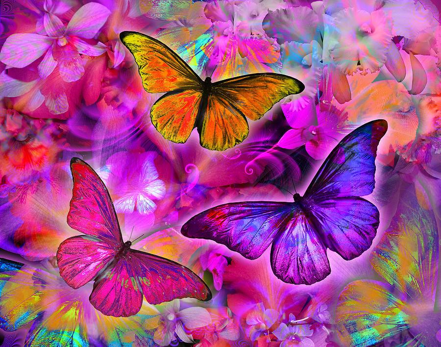 Rainbow Orchid Morpheus Photograph