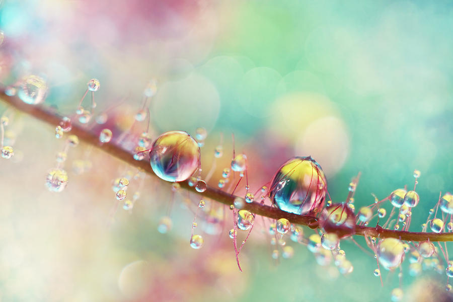 Rainbow Smoke Drops Photograph