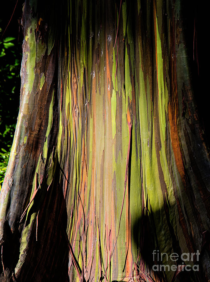 Rainbow Tree Photograph