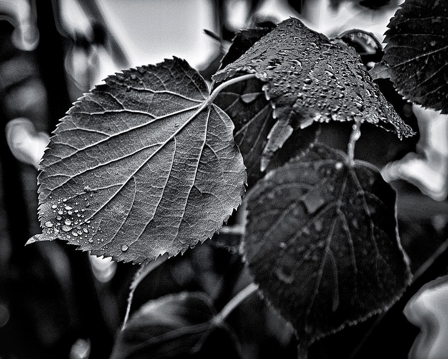 Alive Photograph - Raindrops After The Storm by Brian Carson