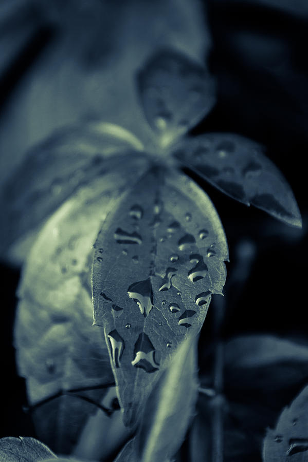 Raindrops Photograph  - Raindrops Fine Art Print