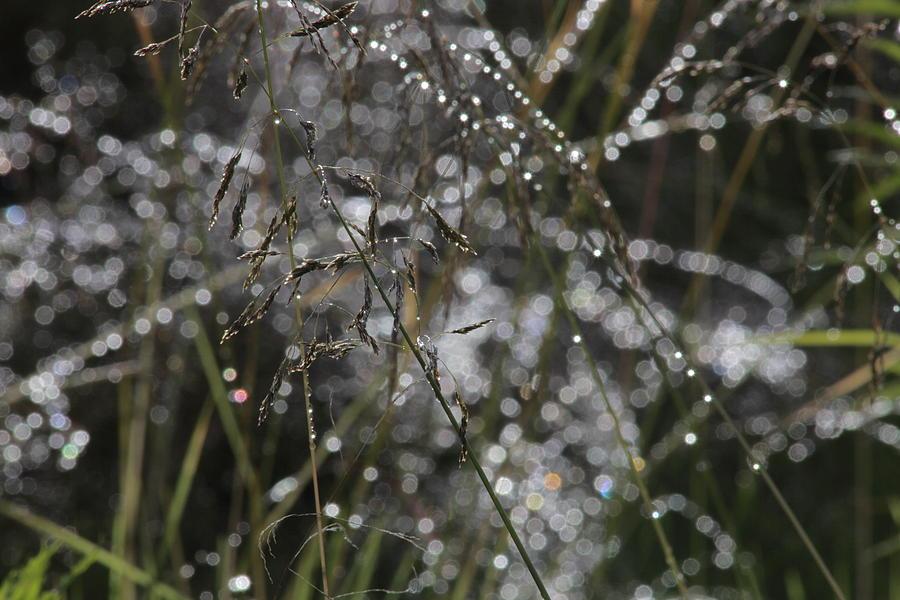 Raindrops sun and cupid