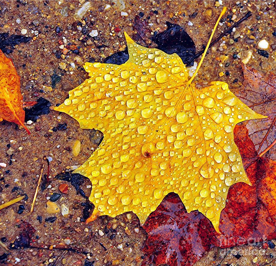 Raindrops On Autumn Leaf by Terri Gostola