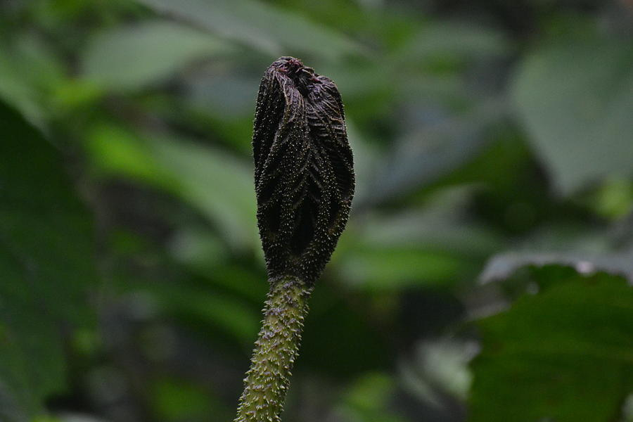 Rainforest Pod Photograph