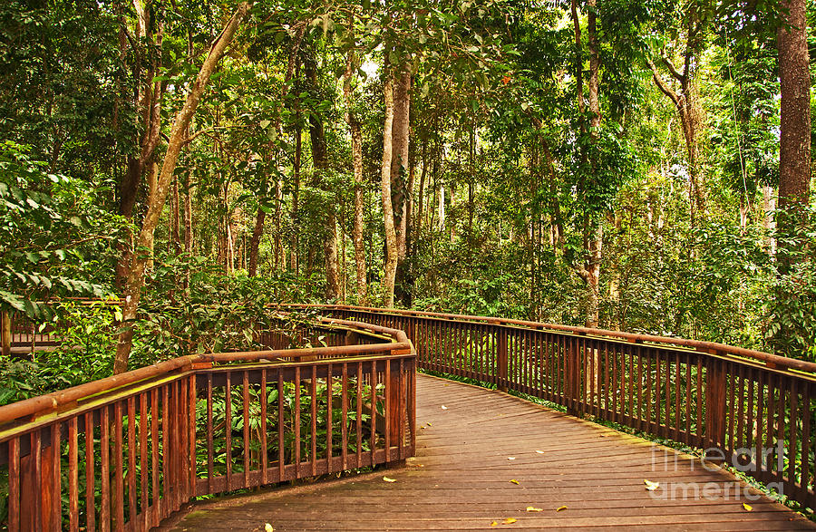 Rainforest Walkway Photograph  - Rainforest Walkway Fine Art Print