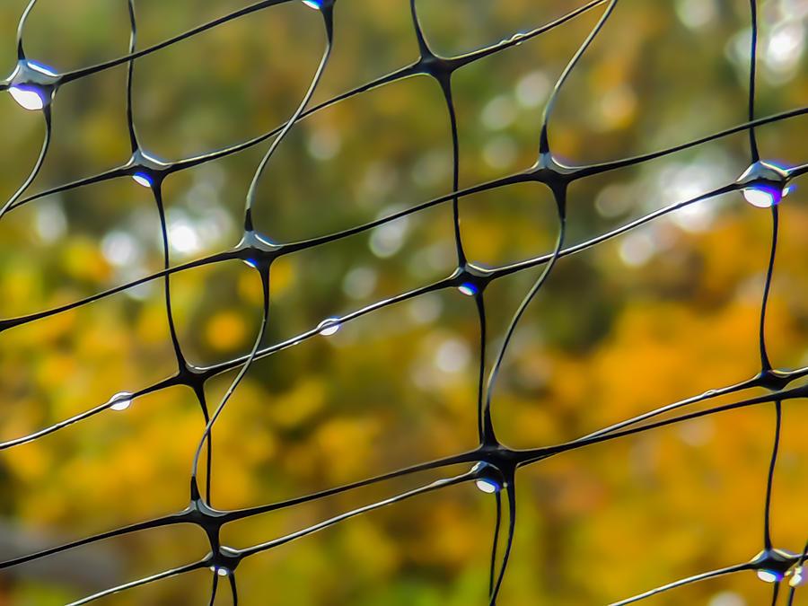 Rainy Autumn Morning Photograph