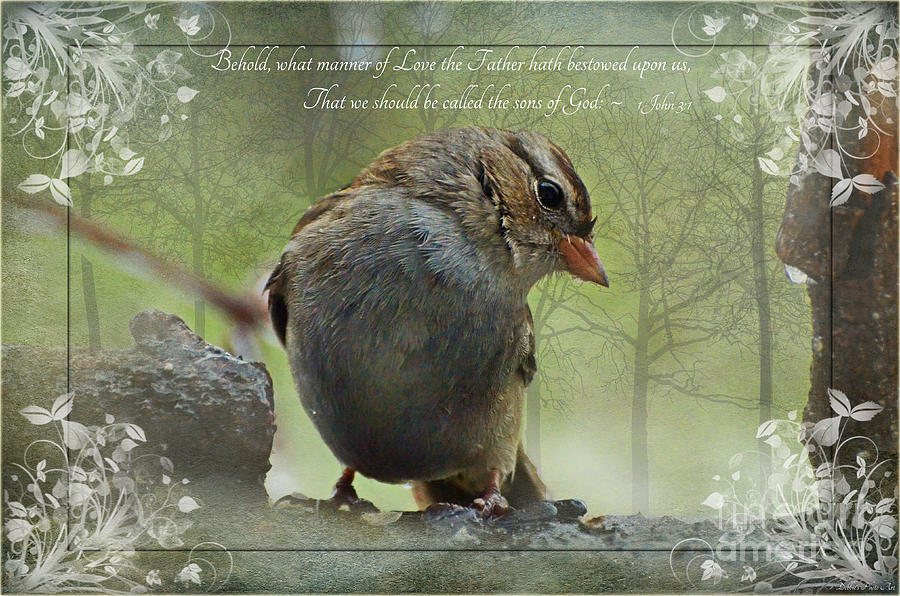 Rainy Day Sparrow With Verse Photograph By Debbie Portwood