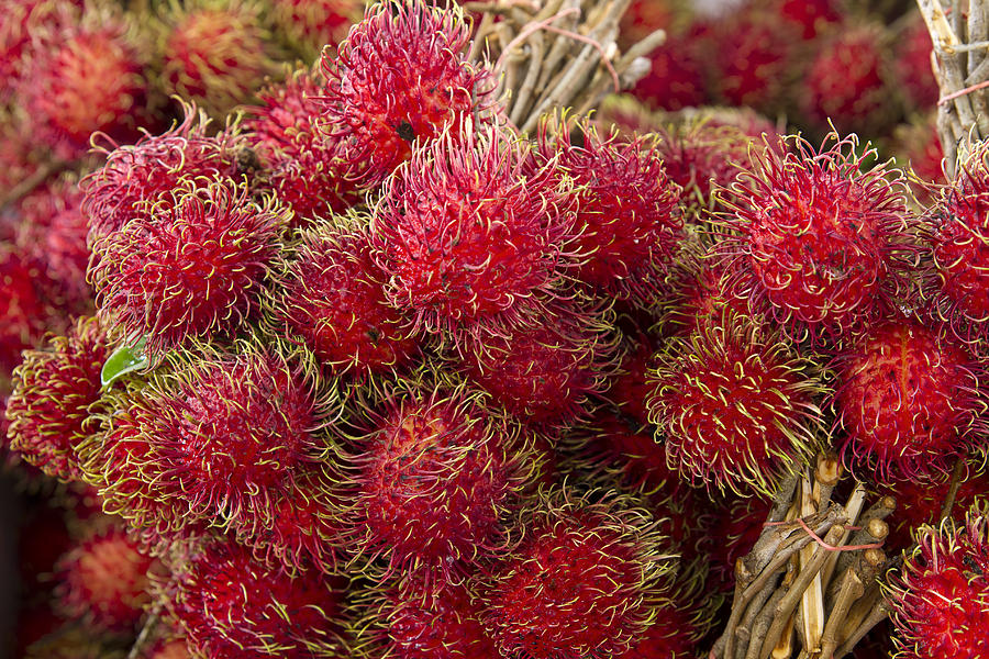 Rambutan Fruits is a photograph by David Gn which was uploaded on May ...