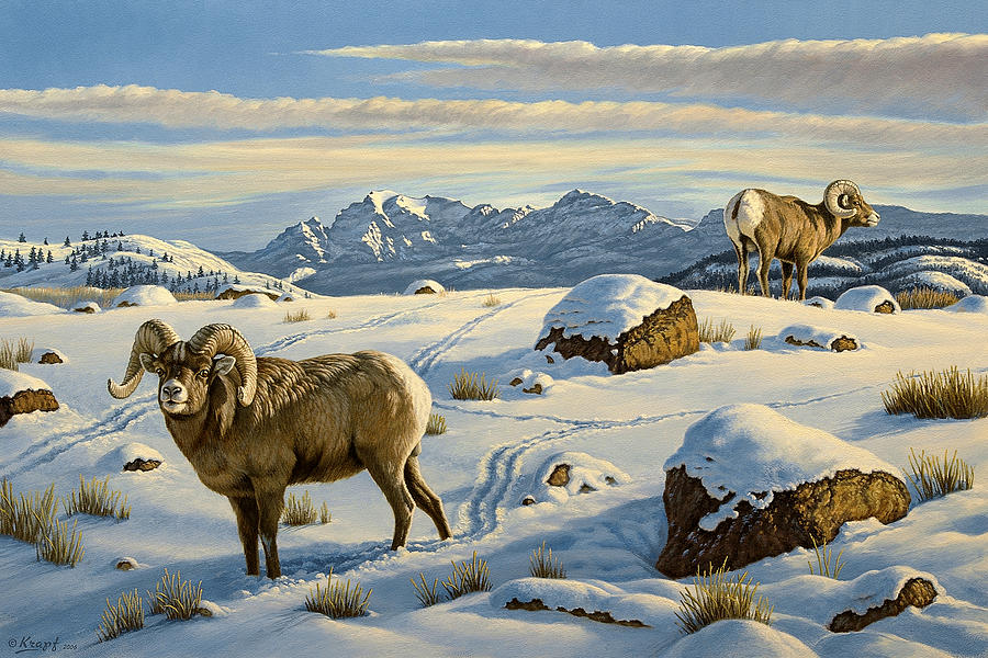 Wildlife Painting - Rams Down From Junction Butte by Paul Krapf
