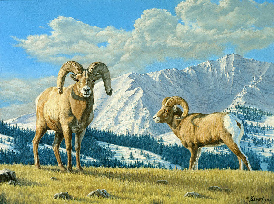 Rams On The Ridge  Painting