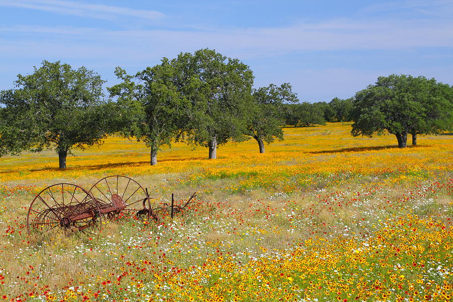 Ranch And Wildflowers And Old Implement  2 Photograph  - Ranch And Wildflowers And Old Implement  2 Fine Art Print
