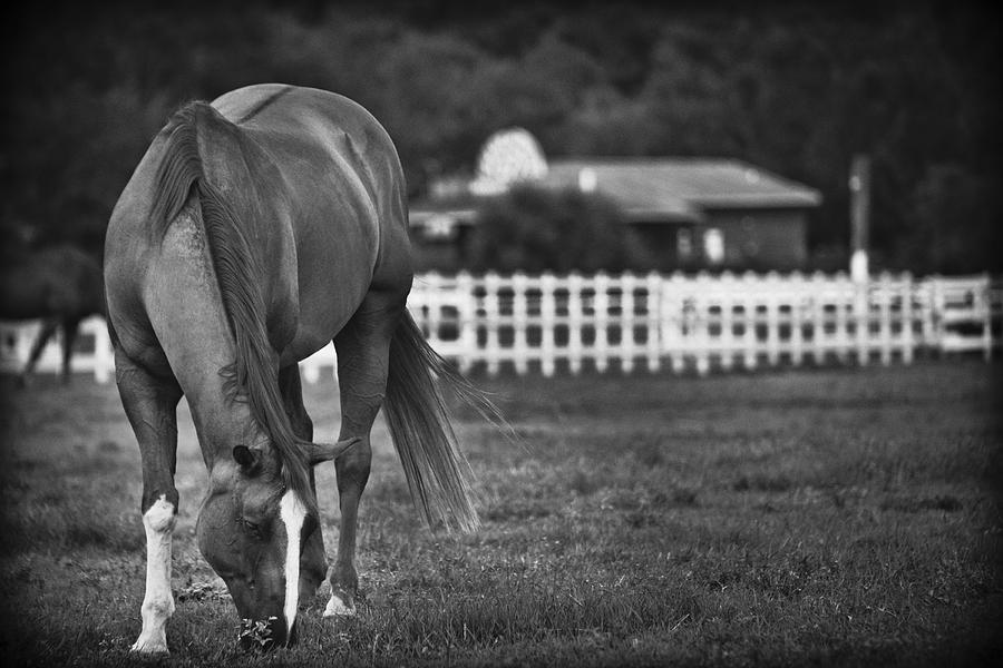 Ranch Horse Photograph