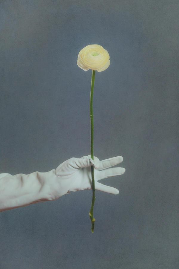 Ranunculus Photograph
