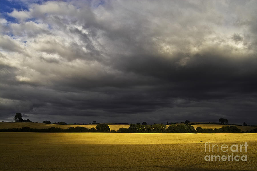 Rapefield Under Dark Sky Photograph