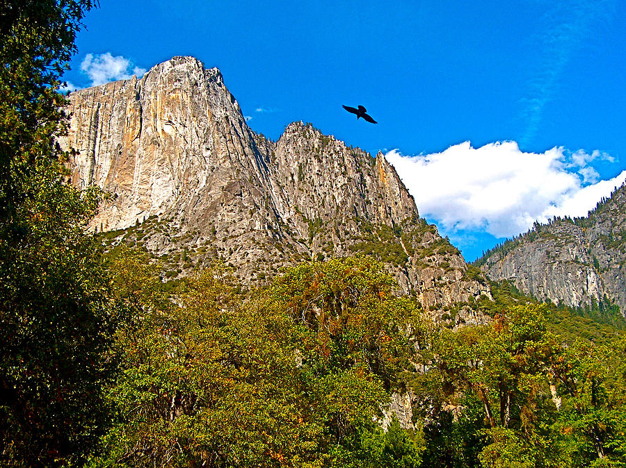 Raven Flying Over Yosemite Valley In Yosemite Np-ca Photograph  - Raven Flying Over Yosemite Valley In Yosemite Np-ca Fine Art Print