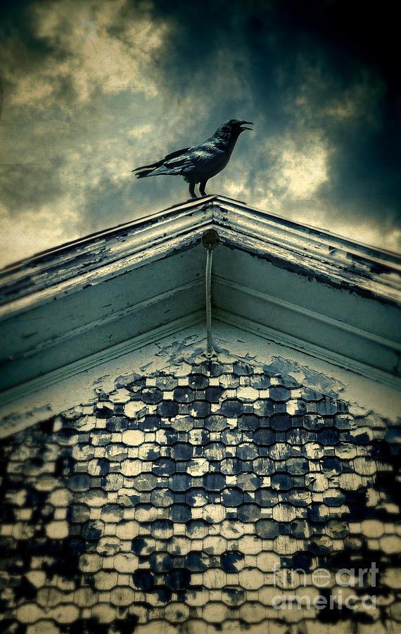 http://images.fineartamerica.com/images-medium-large-5/raven-on-roof-jill-battaglia.jpg