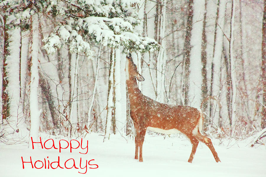 Deer.holidays Photograph - Reach For It Happy Holidays by Karol Livote