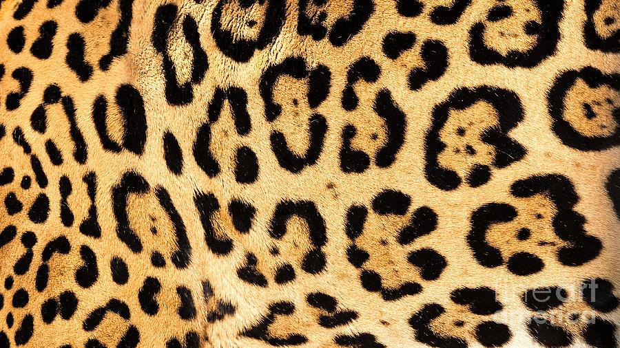 Image Gallery jaguar print
