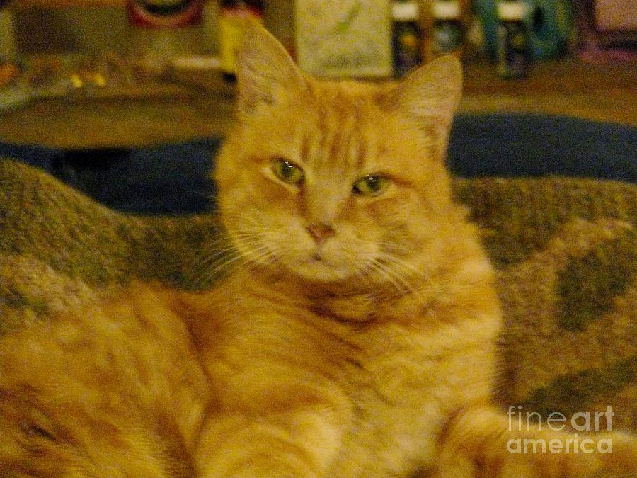 Cat Photos Photograph - Really? by Jacquelyn Roberts