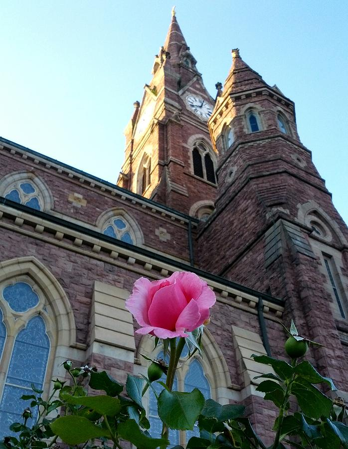 Beautiful Young Rose Against A Church Tower On A Warm Summer Evening. Photograph - Rebirth by Billy Lane