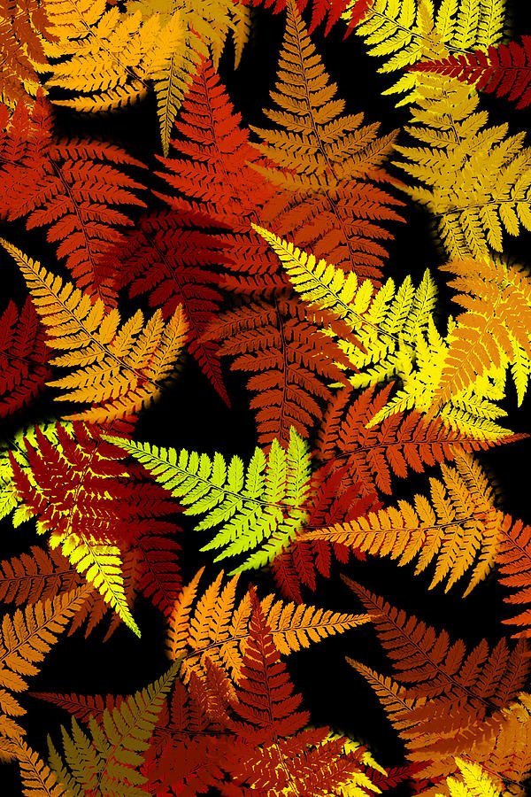 Red Abstract Fern Leaf Pattern Art Digital Art
