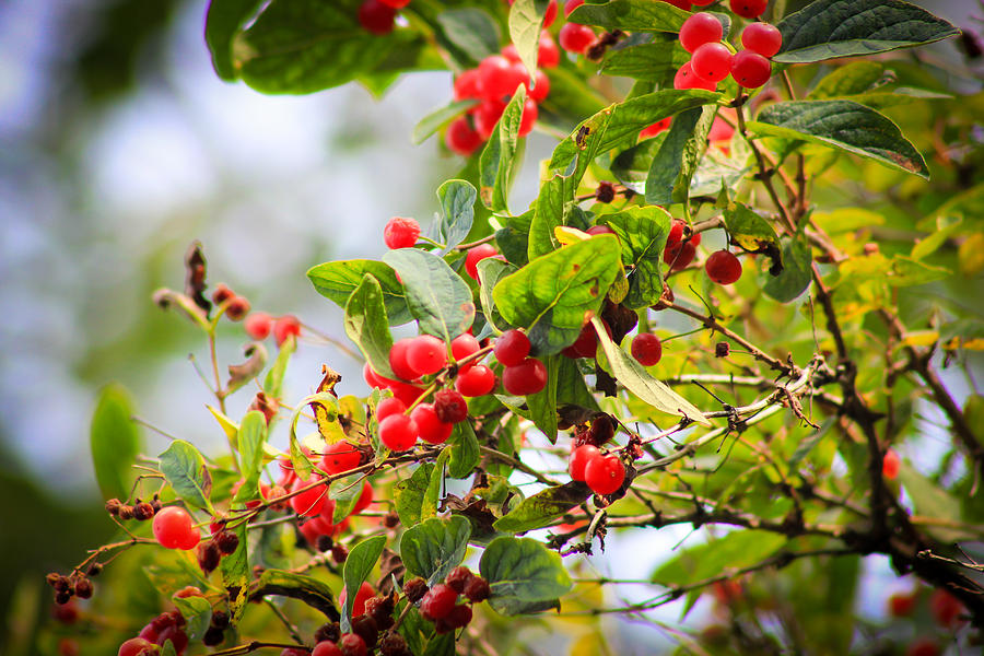Red And Green Photograph