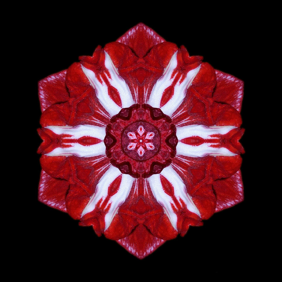 Flower Photograph - Red And White Amaryllis Iv Flower Mandala by David J Bookbinder