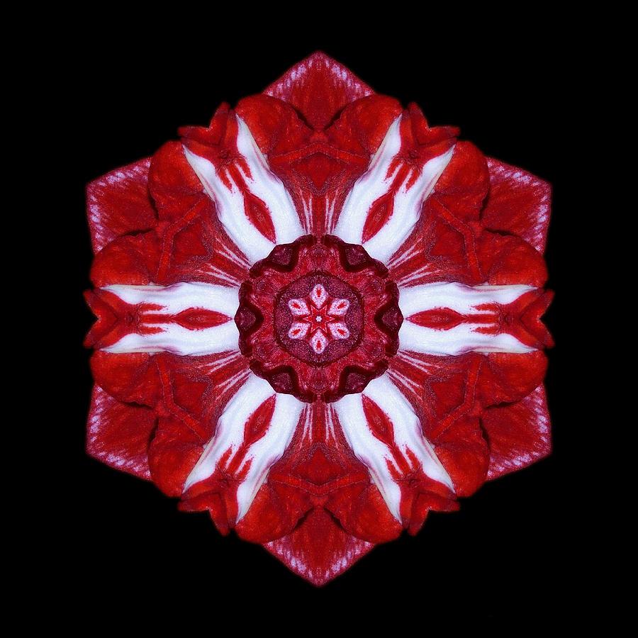 Red And White Amaryllis Iv Flower Mandala Photograph