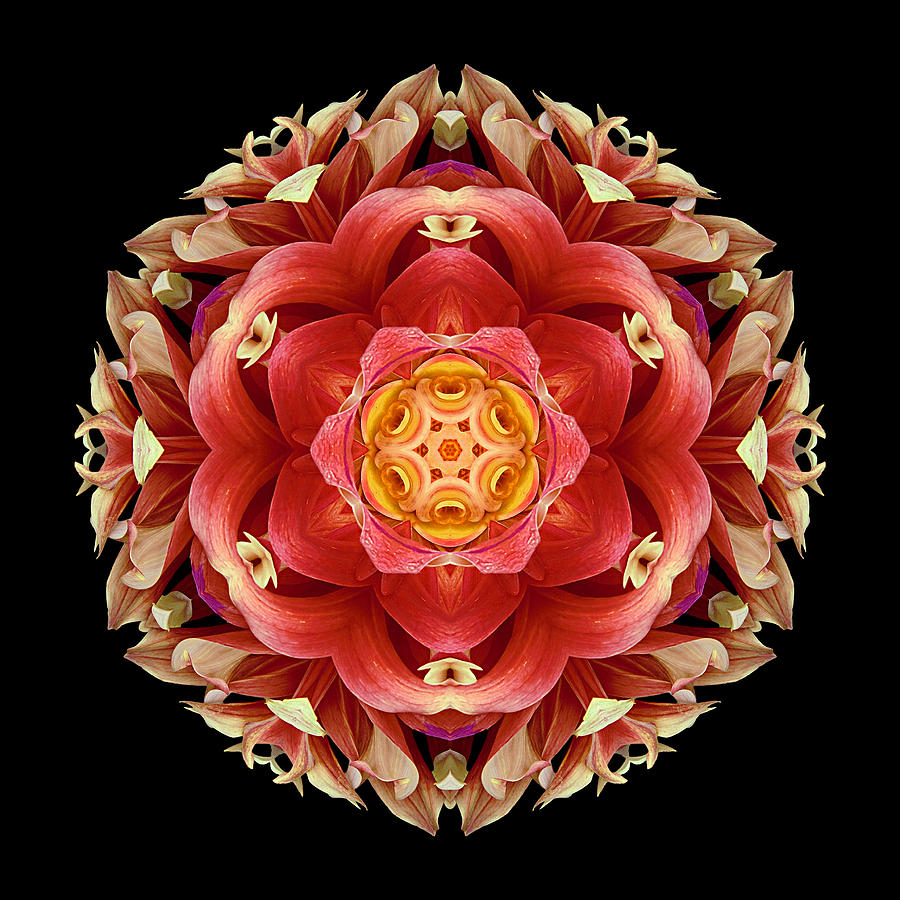 Red And Yellow Dahlia IIi Flower Mandala Photograph