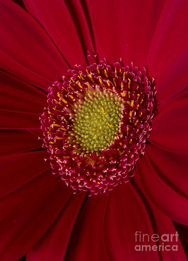 Red And Yellow Photograph  - Red And Yellow Fine Art Print