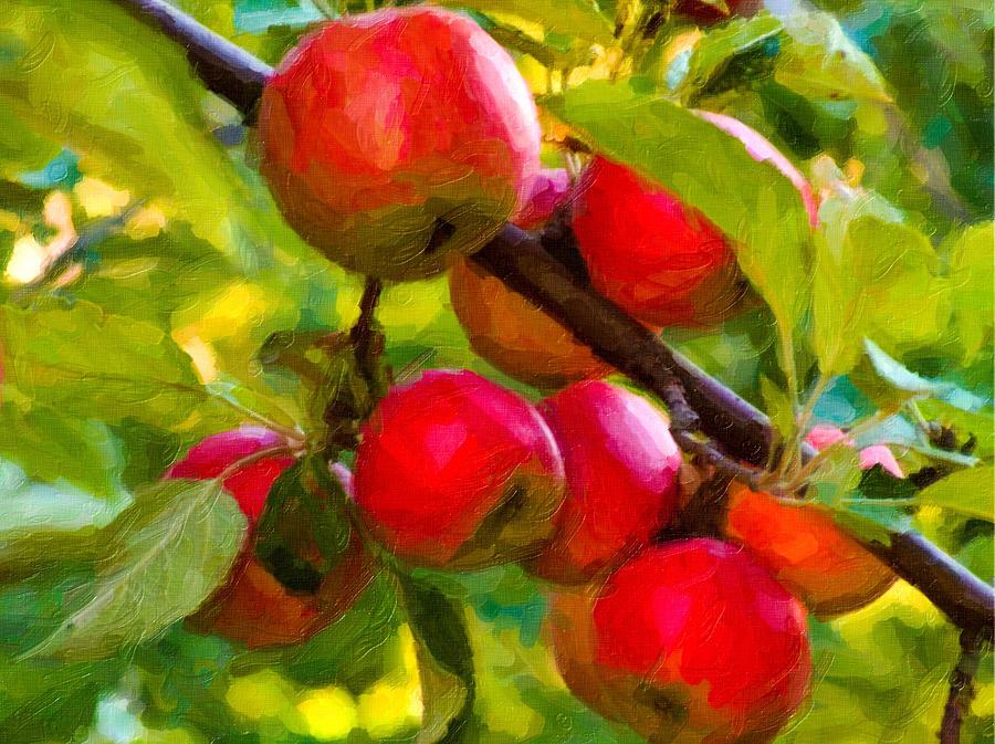 honeycrisp apfelbaum kaufen