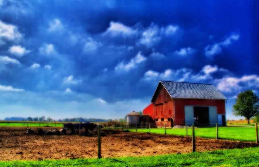 Red Barn And Cows In Ohio Photograph
