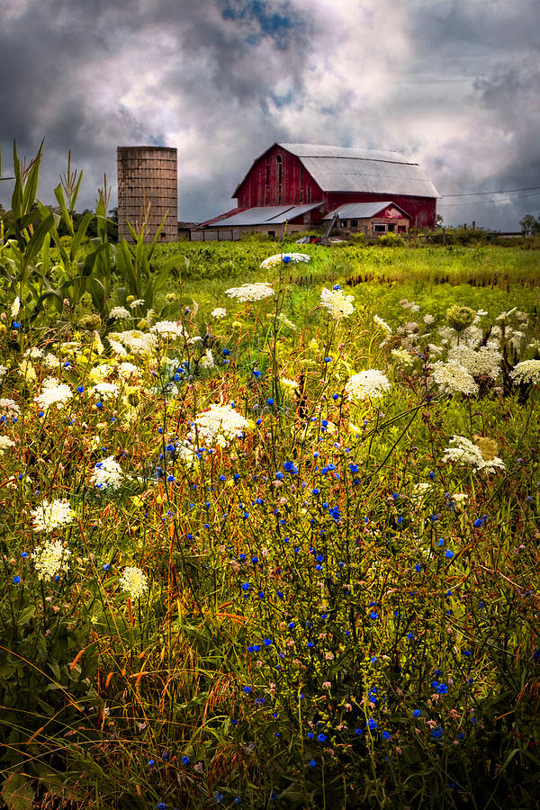 Red Barns In The Wildflowers Photograph