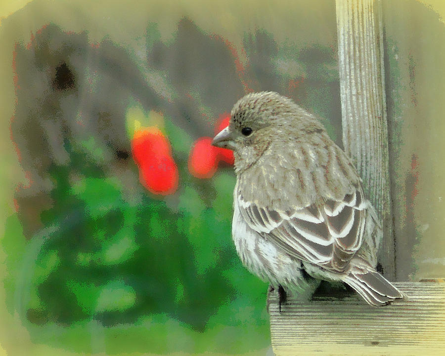 Red Behind Little Beak Photograph  - Red Behind Little Beak Fine Art Print
