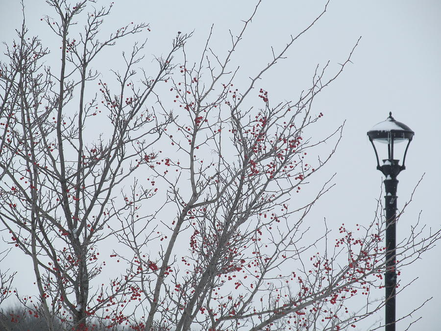 Red Berries And Lamppost Photograph  - Red Berries And Lamppost Fine Art Print