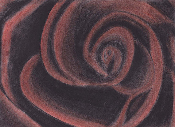 Red Charcoal Rose Drawing