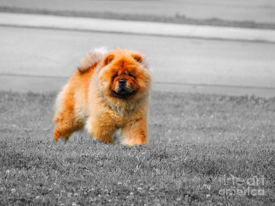 Red Photograph - Red Chow by Jai Johnson