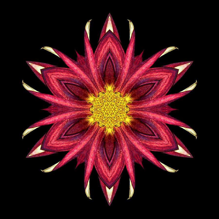 Red Chrysanthemum IIi Flower Mandala Photograph