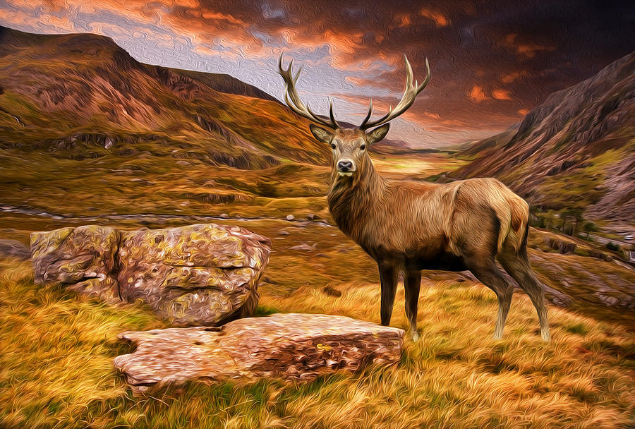 Landscaping Ties Red Deer : Red deer stag in moody dramatic mountain sunset landscape digital painting photograph by matthew