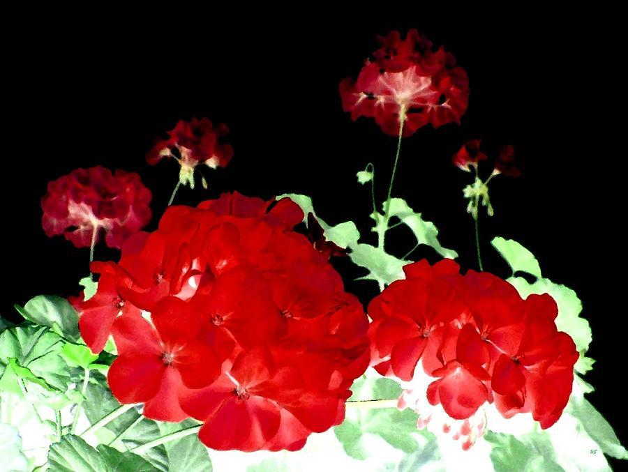 Red Geraniums Digital Art