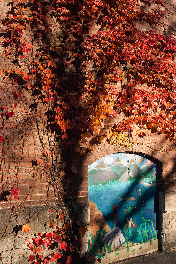 Red Ivy Brickwall Shelburne Falls Massachusetts Photograph