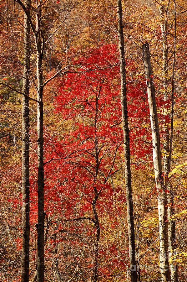 Autumn Photograph - Red Leaves by Patrick Shupert