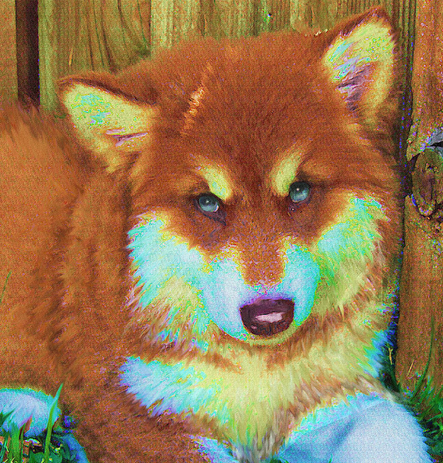 Red Malamute Digital Art