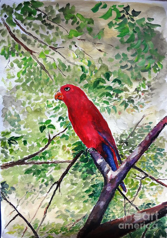 Red Parrot Of Papua Painting