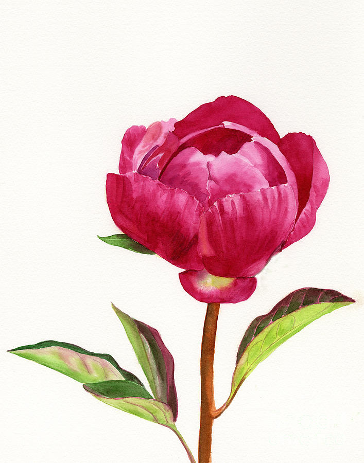 Red Peony With Leaves Painting  - Red Peony With Leaves Fine Art Print