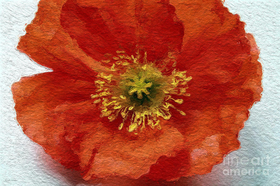Red Poppy Mixed Media  - Red Poppy Fine Art Print