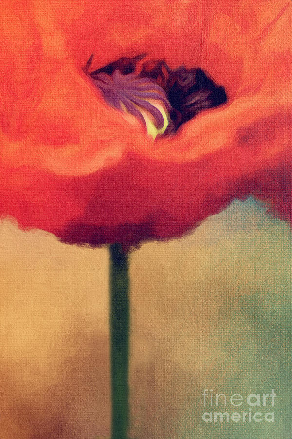 Red Poppy Digital Art
