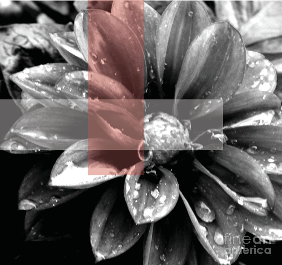 Red Rain Blossom Photograph
