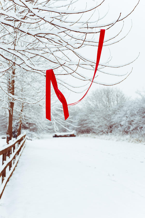 Red Ribbon In Tree Photograph